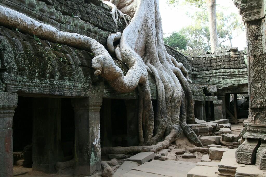 Baumwurzel im Ta Prohm Tempel