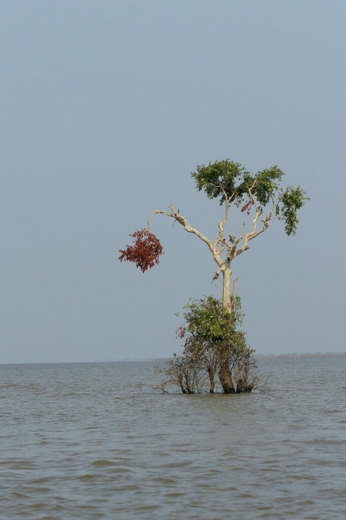 Baum unter Wasser